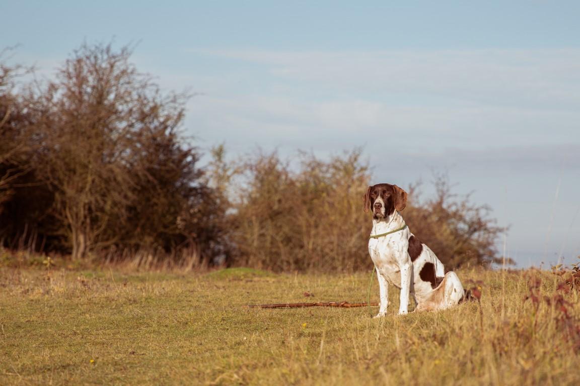 Highland Living pour chiens adultes actifs