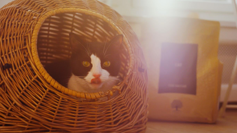 Des croquettes pour chats et chatons